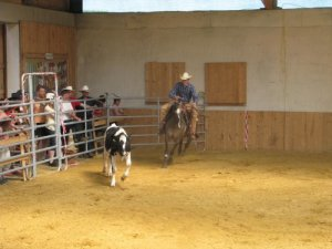 Working Cowhorse in Aktion